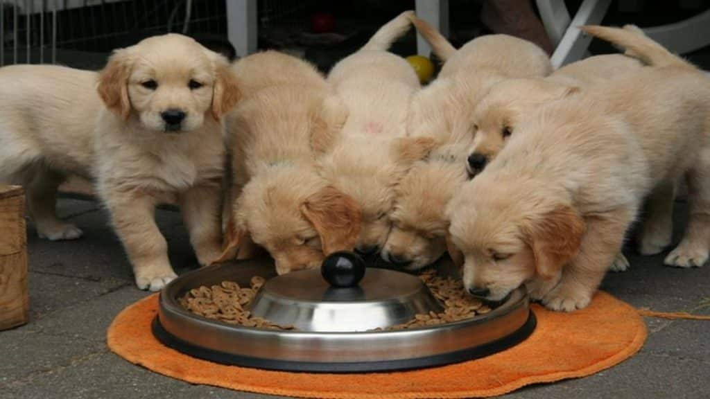 Cuddly pups