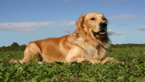 Best Nail Trimmers for a Golden Retriever