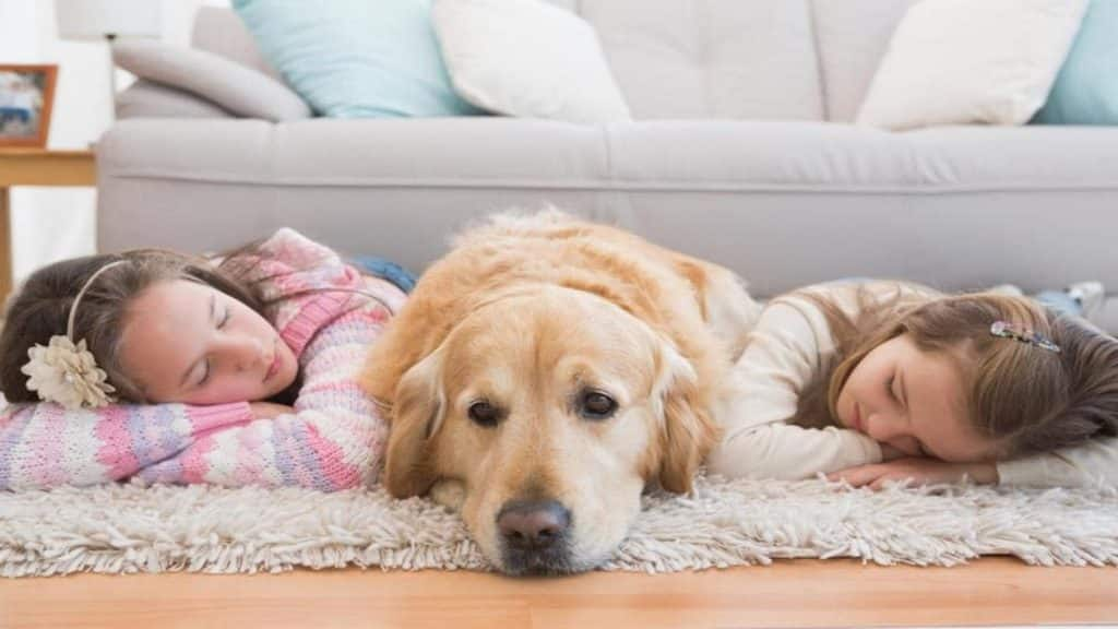 best dog beds for golden retrievers