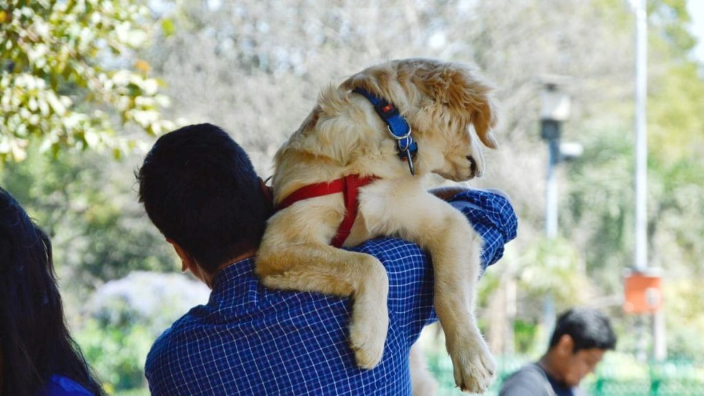 best dog collars for golden retrievers