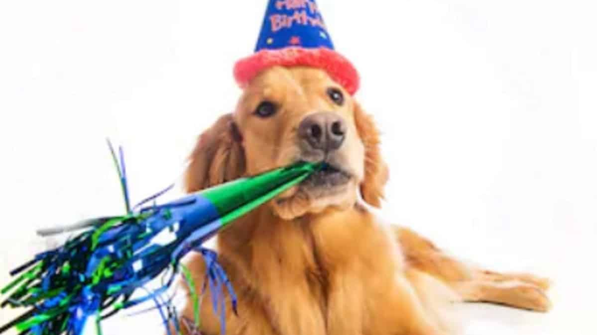 Best Dog Costumes For Golden Retrievers 11 Of Our Favorites 2020