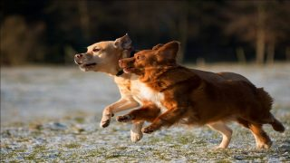 two puppies running