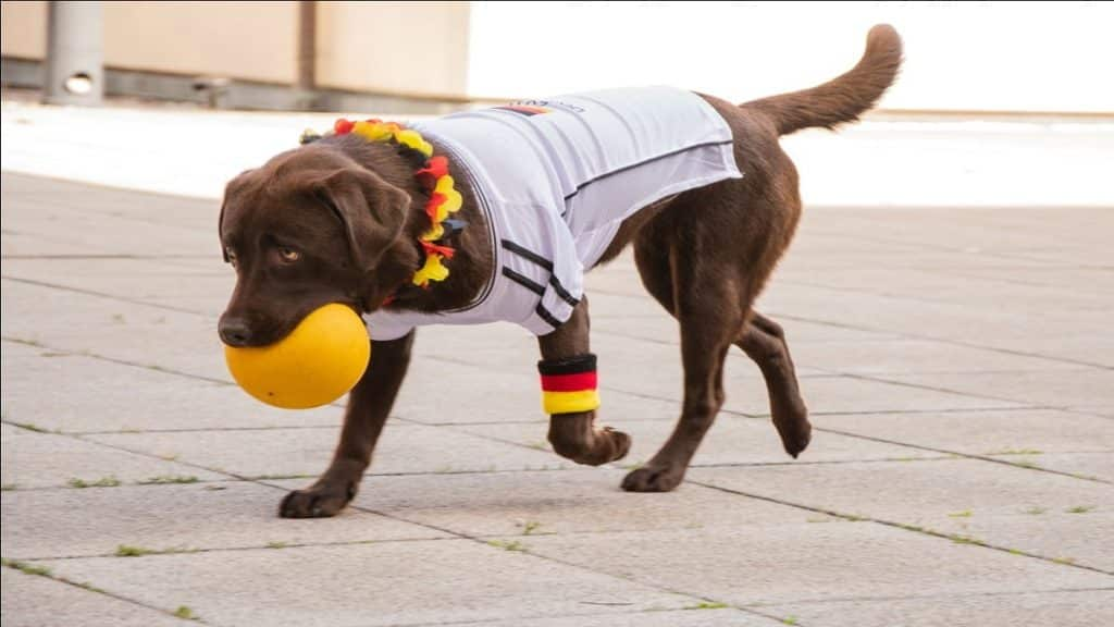 a dog holding a ball