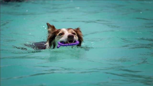 dog biting a toy in water