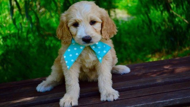 An Adorable Pup
