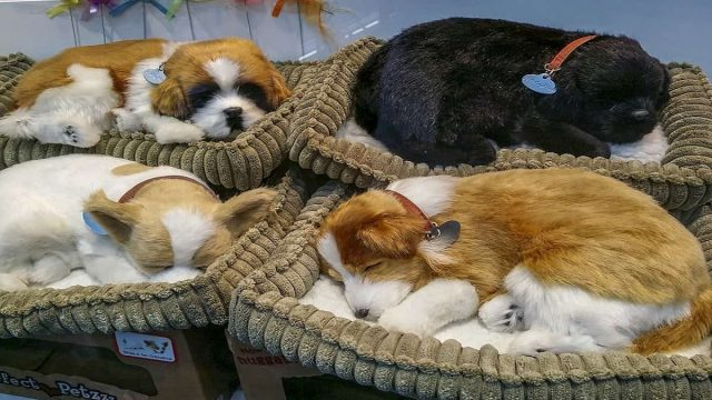 Adorable Dogs in Dog Beds