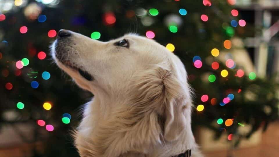 gifts for golden retriever owners